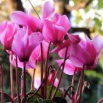 piante fiorite autunnali
